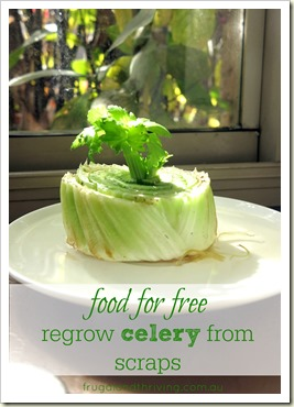 Celery-grown-from-scraps